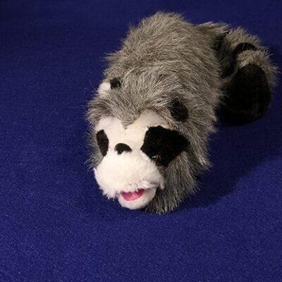 Roxie The Raccoon (Spring Animal) - Trick
