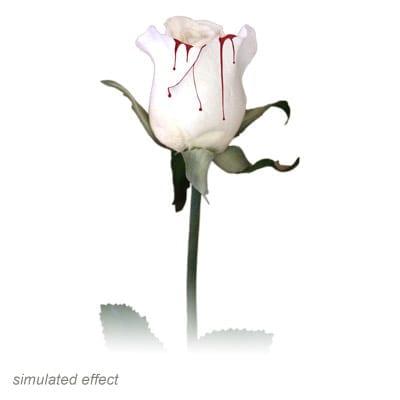 Bleeding Rose by Visual Magic - Trick